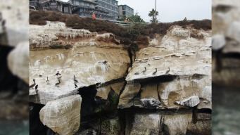 Coastal Road Reopened In La Jolla After Sea Cave Stabilization Project