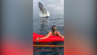 Rio de Janeiro Outrigger Canoe Team Encounters Whale