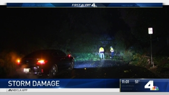 Large Tree Topples in Pomona Ahead of Storm