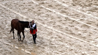 Maximum Security's Owner Vows Derby Appeal, Talks Preakness