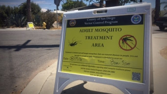 San Diego to Spray for Mosquito That Carries Zika Virus