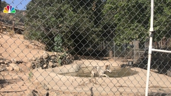 15 Wolves Rescued from Fur Farm, Now Call SoCal Home