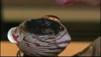 NewsConference: LA City Atty Making Huge Progress in Shutting Down Pot Shops
