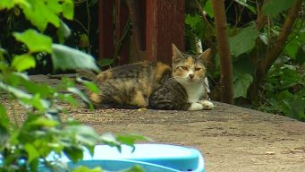 Dozens of Cats Seized From Hoarder's Home