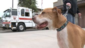 Shelter Dog Works On Bucket List