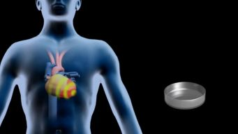 Stem Cells Show Promise For Hearts