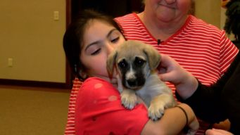Puppy Found in Mailbox Finds New Home