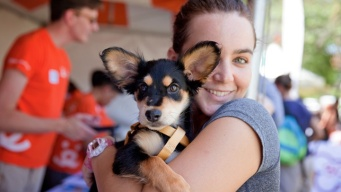 Fall for 1,000+ Animals at NKLA's Super Adoption