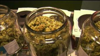NewsConference: Californians Decry Federal Pot Enforcement