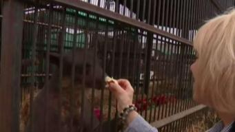 NewsConference: CA Lawmakers to Vote on Animal Rights