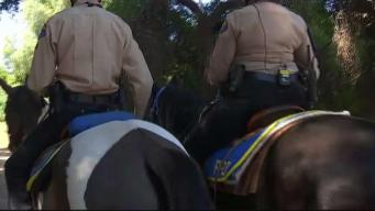 Pasadena Mounted Posse Are Eyes and Ears of Department