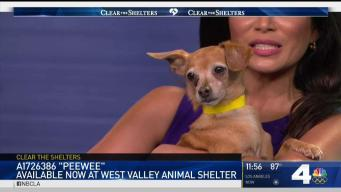 Pet of the Week: Peewee