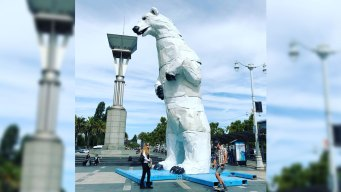 Polar Bear Stands in SF as Reminder of Climate Change