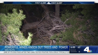 Powerful Winds Knock Down Trees
