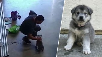 Man Stole San Jose Puppy and Gave it to His Ex-Girlfriend