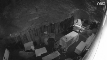 Running Spring Bear Visits Captured on Home's Cameras