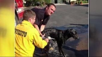 Local K-9 Rescue Team Shares Stories from Montecito