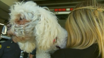 Santa Monica Firefighters Save Dog