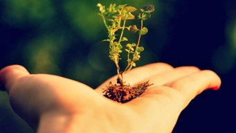 It's Easy Being Green: Five Ways You Can Help the Environment