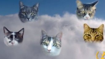 And Now, the Award for Best New Internet Cat Video