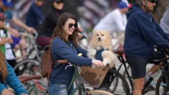 Weekend: CicLAvia Pups by 'The Valley'