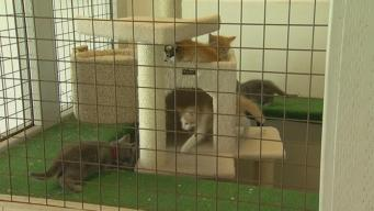 Drought a Factor in Abandoned Kittens