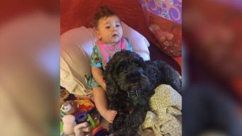 Family Dog Dies Shielding Baby From Flames, Officials Say