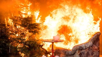 5 Tips for Preventing a Christmas Tree Fire