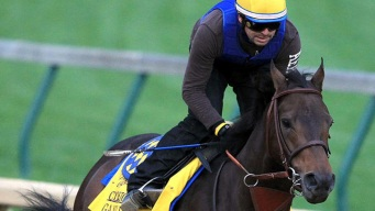 Game On Dude Among Breeders' Cup Pre-Entries