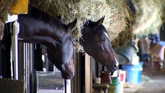 Breeders' Cup: Send Us Your Pictures