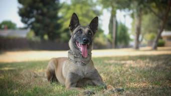 Police Dog Stabbed While Detaining Suspect is Recovering