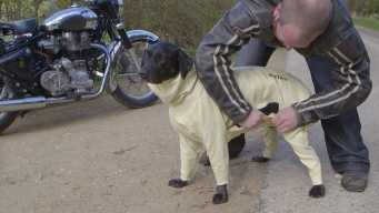 Biker Dog in UK Gets His Own Yellow Kevlar Coat