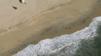 Shark Sighting Prompts Closure of 2 Orange County Beaches