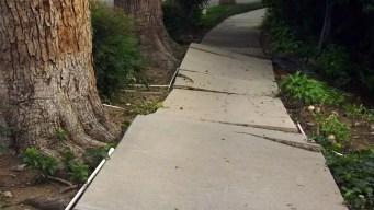 LA City Council Considers $3 Million Sidewalk Slip Payout