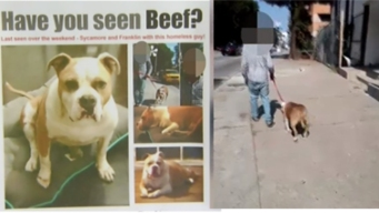 Where's Beef? Man Believes Dog Taken by Homeless Man