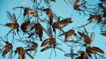 Zika No Longer Emergency, Still 'Enduring' Threat: WHO