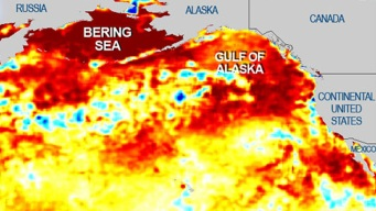"Pacific ""Blob"" Inching Closer to CA: NOAA"