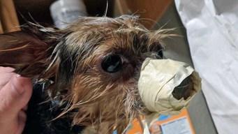 Dog Owners Accuse Groomer of Animal Cruelty: Sheriff