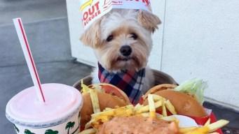 Meet Popeye, the Foodie Rescue Pup