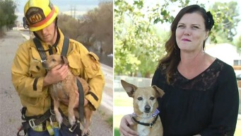'Lucky' Dog Rescued From Raging LA River Finds Forever Home