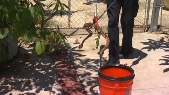 Family Finds Third Rattlesnake in Backyard This Summer