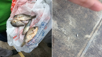 Fish 'Literally Fell From the Sky' With Rain in Mexican City