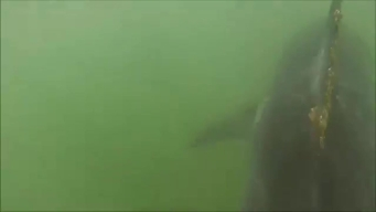 RAW VIDEO: Shark Swims Off OC Coast