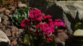 Drought Means Big Business for Landscapers