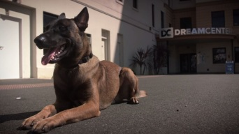 Canine Companions Offer Love and Support to Returning Vets