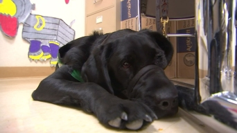 High School Students Train Guide Dogs for the Blind