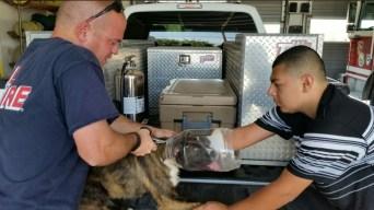 Dog Gets Head Stuck in Trail-Mix Jar