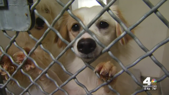 25 Dogs Seized From Torrance Home Overcrowds Shelter
