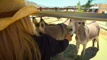 Meet the Volunteers Who Rescued a Donkey Shot by an Arrow