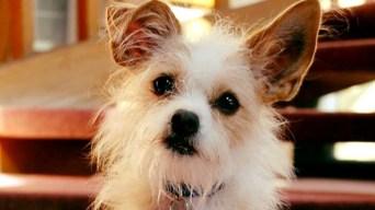 Burbank Shelter Dog Inspires the Awws in 'Oz'